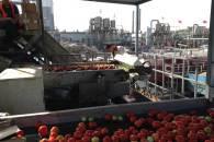 Happy Tomato: applicazione in fabbrica