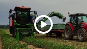 "Guaresi Super G 48"" Tomato Harvester Raccogli Pomodoro"